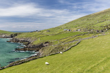 Sheep Fences and Rock Walls Along the Dingle Peninsula Photographic Print by Michael Nolan