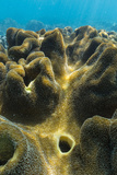 Hard and Soft Corals on Underwater Reef on Jaco Island, Timor Sea, East Timor, Southeast Asia, Asia Photographic Print by Michael Nolan
