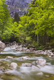Bohinj River in the Bohinj Basin, Triglav National Park, Julian Alps, Slovenia, Europe Photographic Print by Matthew Williams-Ellis