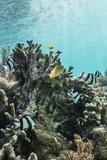 Underwater Reef System on Pink Sand Beach, Komodo National Park, Komodo Island, Indonesia Fotografisk tryk af Michael Nolan