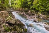 Bridge across the Zadlascica River Canyon, Tolman Gorges, Triglav National Park, Slovenia, Europe Photographic Print by Matthew Williams-Ellis