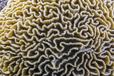 Brain Coral at Night on Sebayur Island, Komodo Island National Park, Indonesia Photographic Print by Michael Nolan