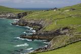Sheep Fences and Rock Walls Along the Dingle Peninsula Reproduction photographique par Michael Nolan