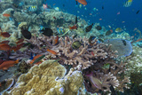 A Profusion of Coral and Reef Fish on Batu Bolong, Komodo Island National Park, Indonesia Photographie par Michael Nolan