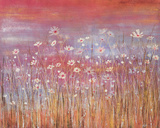 Wild Daisies at Sundown Giclee Print by Jo Starkey