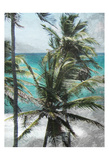 Coconut Tree Prints by Sheldon Lewis