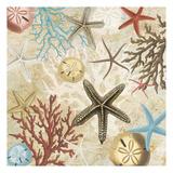Coral Menagerie 1 Prints by Carole Stevens