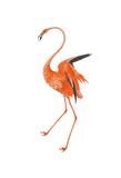 Orange Flamingo Art by Sheldon Lewis