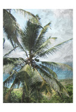 Coconut Beach Print by Sheldon Lewis