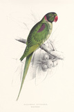 Hooded Parakeet Premium Giclee Print by Edward Lear