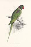 Hooded Parakeet Premium Giclee Print by Edward Lear
