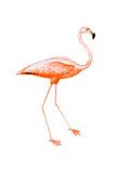 Orange Flamingo 2 Posters by Sheldon Lewis