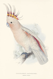 Leadbeater's Cockatoo Premium Giclee Print by Edward Lear