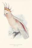 Leadbeater's Cockatoo Premium Giclee Print by Edward Lear