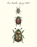 Tree Beetles Prints by Maria Mendez
