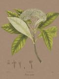 Vintage Botanicals III Giclée-Druck von Nathaniel Wallich
