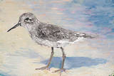 Sandpiper II Prints by Walt Johnson
