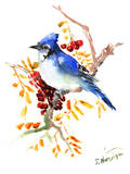 Blue Jay 12 Affiches par Suren Nersisyan