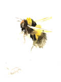 Bumble Bee 2 Prints by Suren Nersisyan