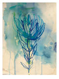 Blue Wash Protea Poster by Paula Mills