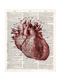 Vintage Anatomy Heart Premium Giclee Print by Christopher James