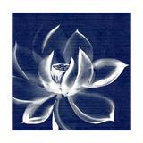 Lotus Shibori Premium Giclee Print by Meili Van Andel