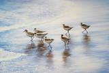 Sand Dancers Affiche par Bruce Nawrocke