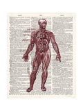 Vintage Anatomy Book Premium Giclee Print by Christopher James