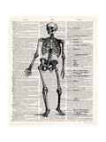 Vintage Anatomy Skeleton Premium Giclee Print by Christopher James