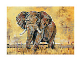 Safari Elephant Premium Giclée-tryk af Madelaine Morris