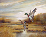 Mallards Prints by Ruane Manning