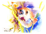 Angelfish 2 Prints by Suren Nersisyan