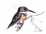 Belted Kingfisher 2 Posters by Suren Nersisyan