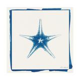 Cyan Starfish Premium Giclee Print by Christine Caldwell