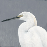 Seabird Thoughts 1 Premium Giclee Print by Norman Wyatt Jr.
