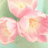 Resplendent Blossoms Art by Sarah Gardner