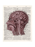 Vintage Anatomy Brain Premium Giclee Print by Christopher James