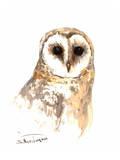 Barn Owl Posters by Suren Nersisyan