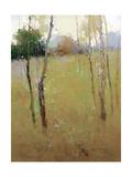 Serene Meadow Premium Giclee Print by Stefano