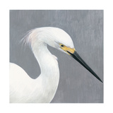 Seabird Thoughts 2 Premium Giclee Print by Norman Wyatt Jr.