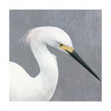 Seabird Thoughts 2 Premium Giclee Print by Norman Wyatt Jr.