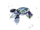 Baby Sea Turtle Reprodukcje autor Suren Nersisyan