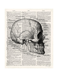 Vintage Anatomy Skull Premium Giclee Print by Christopher James