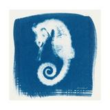 Cyan Seahorse Premium Giclee Print by Christine Caldwell