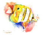 Copperhead Angelfish Prints by Suren Nersisyan