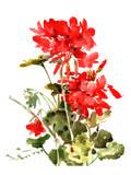 Suren Nersisyan - Geranium 2 - Reprodüksiyon