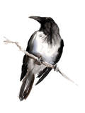 Hooded Crow 3 Posters by Suren Nersisyan