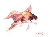 Goldfish Prints by Suren Nersisyan