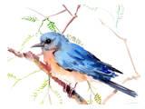 Bluebiurd Art par Suren Nersisyan