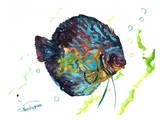 Discus Fish 2 Poster by Suren Nersisyan